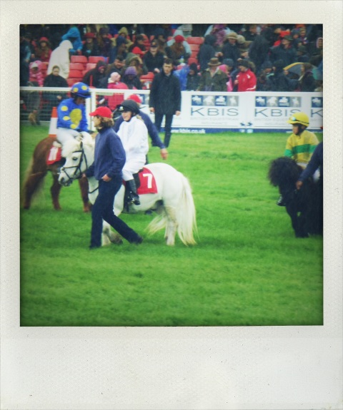 shetland pony