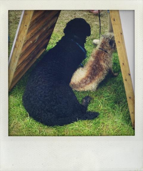 dogs under board